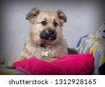 cute shaggy puppy | Shutterstock . vector #1312928165