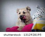 cute shaggy puppy | Shutterstock . vector #1312928195