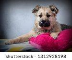 cute shaggy puppy | Shutterstock . vector #1312928198