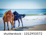 Wild Horses On The Beach