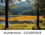 Bayerischer Wald Bavarian Forrest