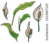 set of hand drawn vector...   Shutterstock .eps vector #1313087135