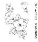 hibiscus rosa sinensis  rose... | Shutterstock . vector #1313094248