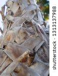 detail texture of trunk palm... | Shutterstock . vector #1313137988
