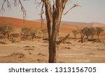 sand dunes in namib naukluft... | Shutterstock . vector #1313156705