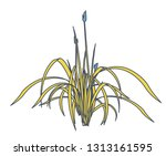 outlined reed and water plants... | Shutterstock .eps vector #1313161595