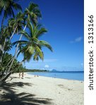 palm trees on martinique beach   Shutterstock . vector #1313166