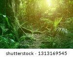 sunlight shining in tropical... | Shutterstock . vector #1313169545