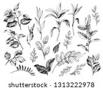 Hand drawn of branches and leaves of wild plants isolated on white background. Pencil drawing monochrome different floral elements set.