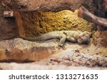 the monitor lizard sits on a... | Shutterstock . vector #1313271635