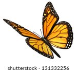 Stock photo monarch butterfly isolated on a white background angled in a three quarter view with open wings as 131332256