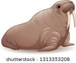 Cartoon Walrus Isolated On...