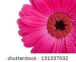 Close Up Of Bright Pink Gerber...