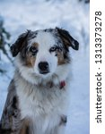 canine dog playing in snow | Shutterstock . vector #1313373278