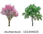 Pink Flower Tree Isolated On...