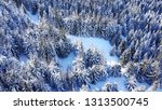 top view of the winter forest.... | Shutterstock . vector #1313500745