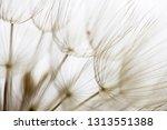beige pattern of dandelion... | Shutterstock . vector #1313551388