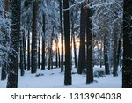 snow covered pine tree forest... | Shutterstock . vector #1313904038