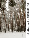 snow covered pine tree forest... | Shutterstock . vector #1313904188
