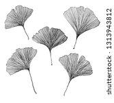ginkgo biloba leaves | Shutterstock . vector #1313943812