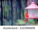 red male northern cardinal... | Shutterstock . vector #1313984858
