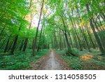 beautiful green forest in summer | Shutterstock . vector #1314058505