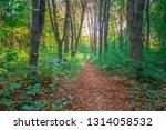 beautiful green forest in summer | Shutterstock . vector #1314058532