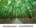 beautiful green forest in summer | Shutterstock . vector #1314058535