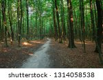 beautiful green forest in summer | Shutterstock . vector #1314058538