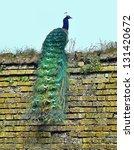Peacock On Brick Wall