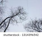 bare trees against gray winter... | Shutterstock . vector #1314396542