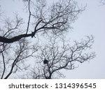 bare trees against gray winter... | Shutterstock . vector #1314396545