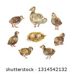 chicken with chicks and nest.... | Shutterstock . vector #1314542132
