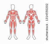 male body muscles vector | Shutterstock .eps vector #1314550202