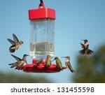 Multiple Hummingbirds At Feede...