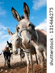 donkeys for riding tourists ... | Shutterstock . vector #131466275