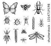 set of hand drawn insects...   Shutterstock .eps vector #1314719198