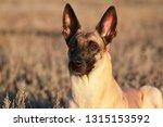 portrait of a beautiful dog...   Shutterstock . vector #1315153592
