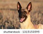 portrait of a beautiful dog...   Shutterstock . vector #1315153595