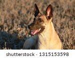 portrait of a beautiful dog...   Shutterstock . vector #1315153598
