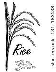 rice sketch. rice plant hand... | Shutterstock .eps vector #1315183538