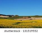 Sunflowers In Field  Near...