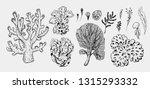 set of sea plants   corals ...   Shutterstock .eps vector #1315293332