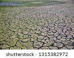 green soil surface with cracks... | Shutterstock . vector #1315382972