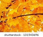 autumn leaves maple  in... | Shutterstock . vector #131543696