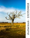 solitary tree in a field with... | Shutterstock . vector #1315524818