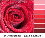 color palette series  shades of ... | Shutterstock . vector #1315552505