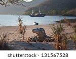 a komodo dragon  varanus...   Shutterstock . vector #131567528