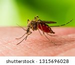 Small photo of Encephalitis, Yellow Fever, Malaria Disease or Zika Virus Infected Culex Mosquito Parasite Insect Macro on Green Background