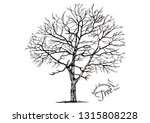 hand drawn tree isolated on... | Shutterstock .eps vector #1315808228